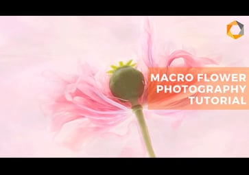 Flower Portraits: Macro Photography Tips and Using the Nik Collection 3 by DxO