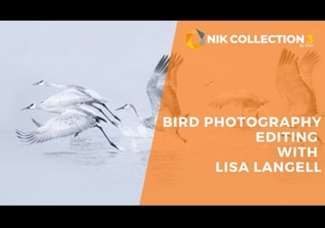 Bird Photography: Breaking Out Of The Mold Using Nik Collection 3 by DxO
