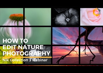 3 Different Creative Nature Photography Workflows with Nik Collection by DxO
