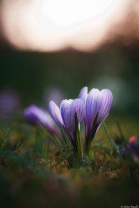 Flower, Nik Collection 4 Macro photography